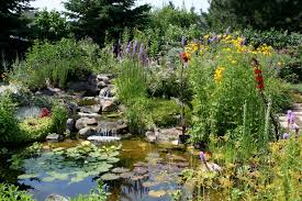 native water plants how to attract wildlife to your garden