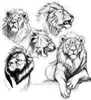 1 18 16 lion sketches by teagangavet on deviantart