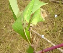 Methods Of Controlling Plant Diseases - ispp