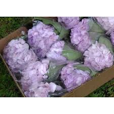 purple hydrangea light purple hydrangeas in bulk