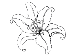 printable lily flower coloring pages free resolution