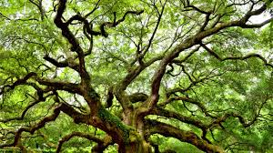 how many tree species are there more than you can shake a stick