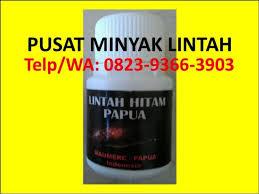 hp wa 0823 9366 3903 jual minyak lintah asli di apotik asli minyak