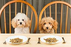 dogs at dinner table holiday pet food drive ongoing until friday january 5 2018 kpbs