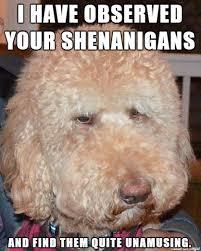 Annoyed Dog Meme - annoyed dog meme on imgur