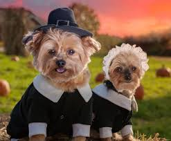 dogs dressed as pilgrims to help make your thanksgiving magical