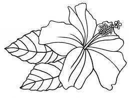 hawaii state flower coloring page yellow hibiscus usa coloring