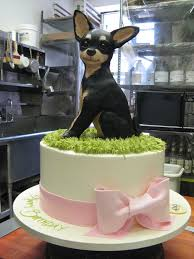 8 best chihuahua cakes images on pinterest cakes chihuahuas and