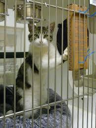 Cool Cat Scratchers Cats R Cool Petfinder Foundation