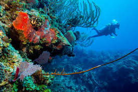 Luxury Homes In Belize by Turneffe Atoll Belize Central America Scuba Diving Packages
