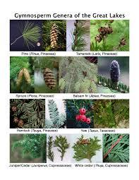 native plants of wisconsin vegetative lab