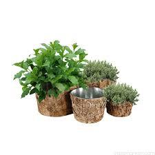 Wood Vases Wholesale Birch Bark Zinc Taper Down Cylinder Planter Set Of 4 Sizes Vase