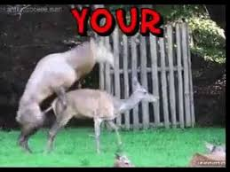 Funny Deer Memes - funny memes deer flies thru bus window youtube