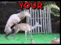 Deer Meme - funny memes deer flies thru bus window youtube