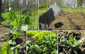 introduction to fall vegetable gardening