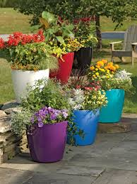 Outdoor Potted Plants Full Sun by How To Create Pots And Planters Container Gardening