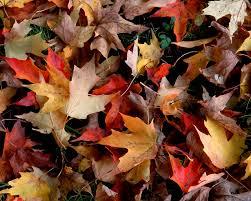 free pumpkin desktop wallpaper free autumn wallpaper wallpapersafari