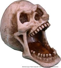 amazon com menacing open mouth human skull gifts and home decor