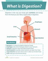 collection of solutions 5th grade digestive system worksheets
