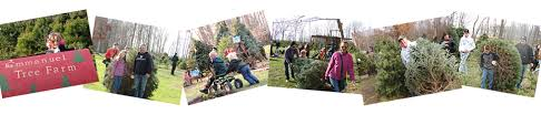 why buy a real tree at emmanuel tree farm an indiana