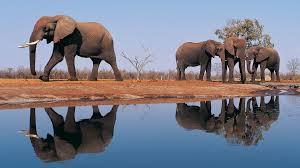desktop elephant cartoons pictures