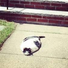 Melting Meme - it s so hot even the cat started melting funny dank memes gag