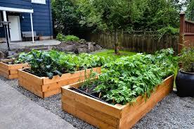 outdoor and patio small backyard vegetable garden and rock