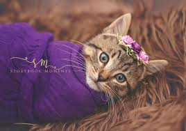 the best newborn kitten photo shoot ever life with cats