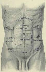 Female Abdominal Anatomy Pictures Human Lower Abdomen Anatomy Human Anatomy Chart