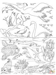 5th day of creation coloring page free printable coloring pages