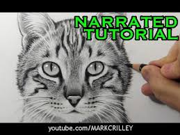 how to draw a cat narrated step by step tutorial youtube