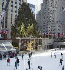 rockefeller center christmas tree arrives on the plaza today com