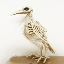 crazy bone skeleton raven plastic animal skeleton bones horror