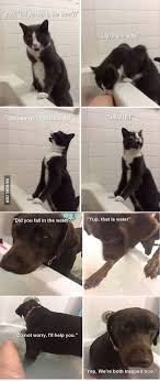 Cute Friend Memes - good intentions animal funny animal and cat