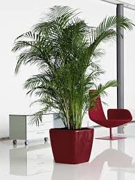 Office Plants by Pdi Plants Blog New Designer Interior Office Planters Burlington