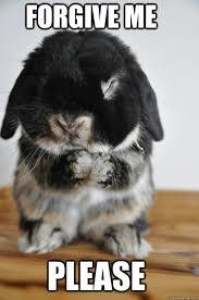 Forgive Me Meme - forgive me please bunny quickmeme