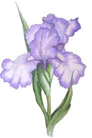 best 25 flower graphic ideas on pinterest flower illustration