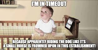 Frowning Dog Meme - frowned upon in this establishment imgflip