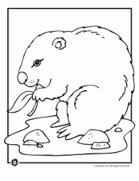 groundhog coloring pages animal jr