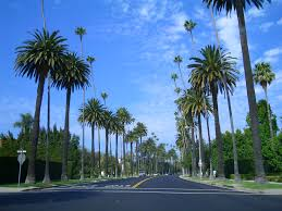Palm Tree Wallpaper Beverly Hills Cop 2 Png 1920 1080 Hd Wallpapers Pinterest