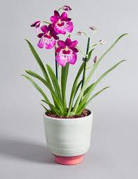 orchid pictures orchids orchid flowers plants phalaenopsis orchid m s