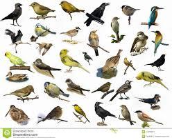 5 letter bird names britische garten v 246 gel stockfotos bild