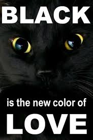 Unlucky Things 141 Best Black Cats Are Not Bad Luck Images On Pinterest Animals