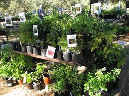 native plant species plant sale n central chapter npsot