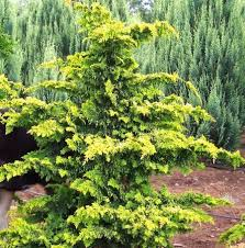 843 best individual trees and shrubs images on plants