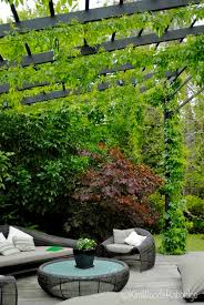 Plants For Pergola by Run Wires Up And Across The Top Of The Pergola This Allows An