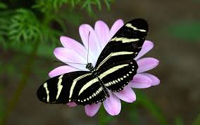 butterfly flower butterfly flower wallpaper dowload