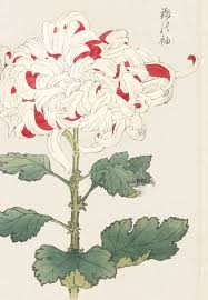 Japanese Flowers Paintings - 17 best images about japanese flower paintings on pinterest