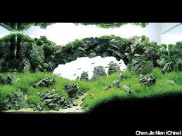 Aquascaping World This Make Me Think Of Ghibli Castel In The Sky Aquascaping