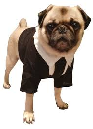 Cute Small Dog Halloween Costumes Cutest Movie Inspired Dog Costumes Halloween Dogvills